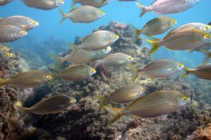 PADI Fish ID