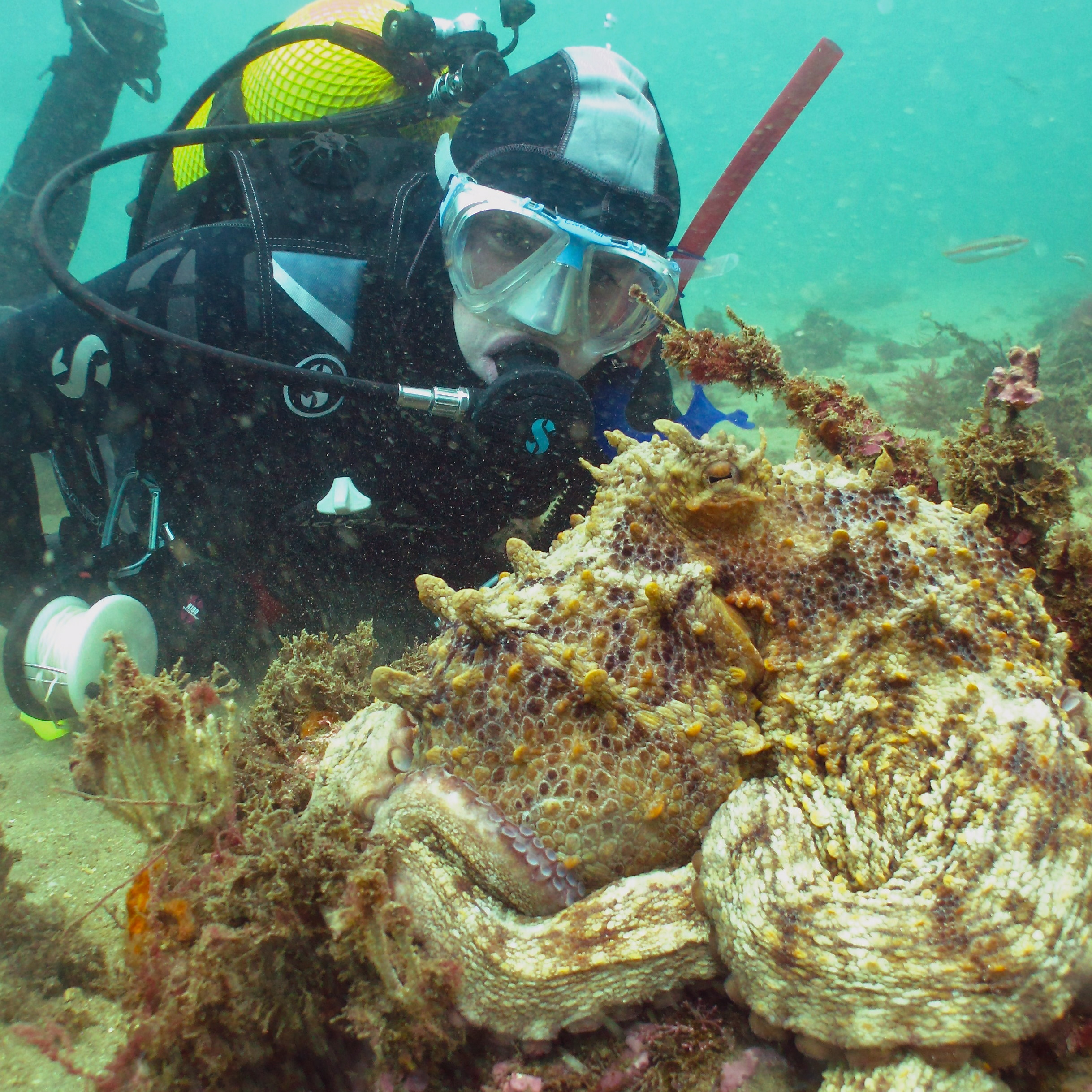 The Marble Wreck (Barco de los Marmoles)