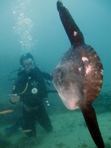 Diver and Sunfish